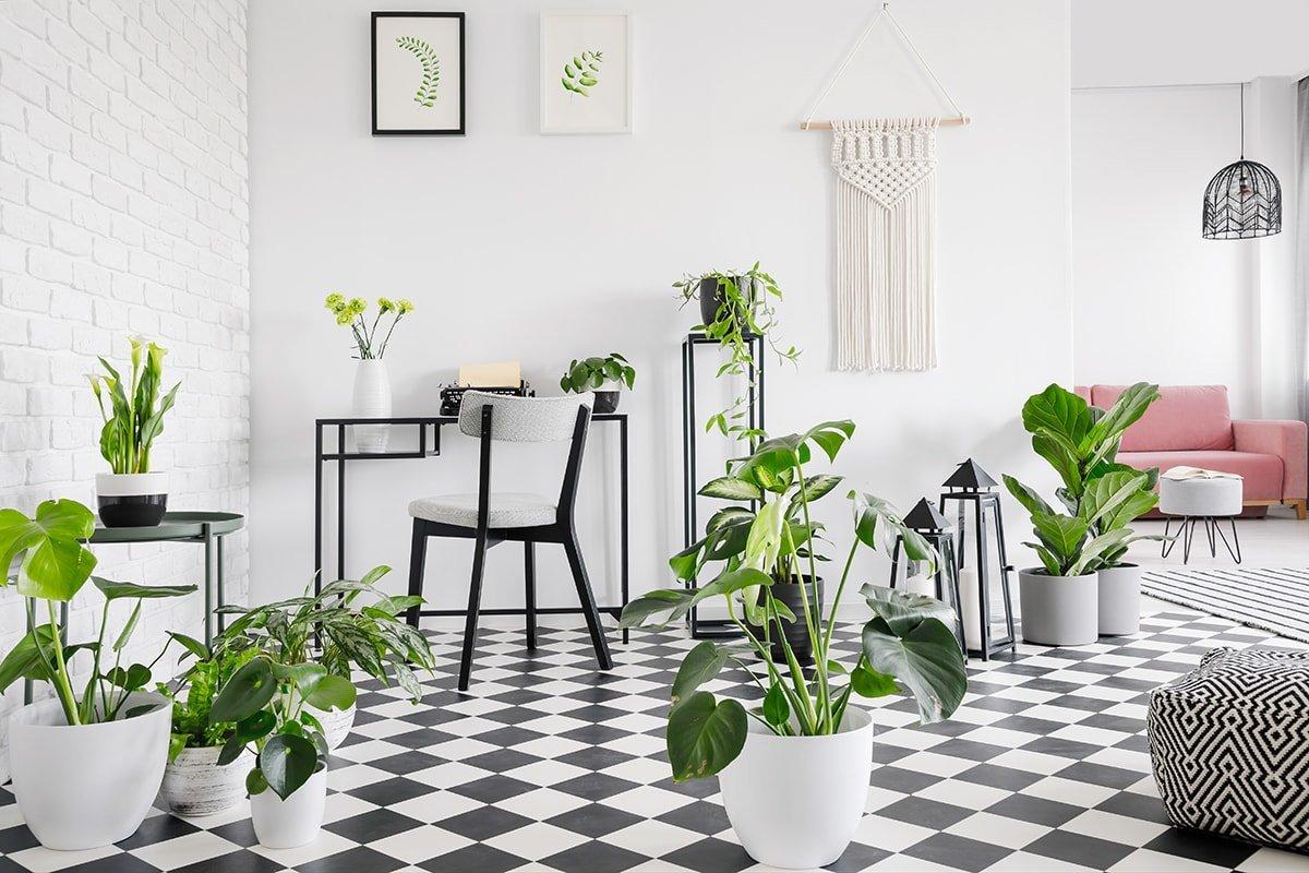 Bright living room full of green plants