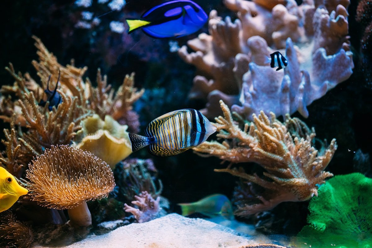 Tropical salt water fish in a coral reef