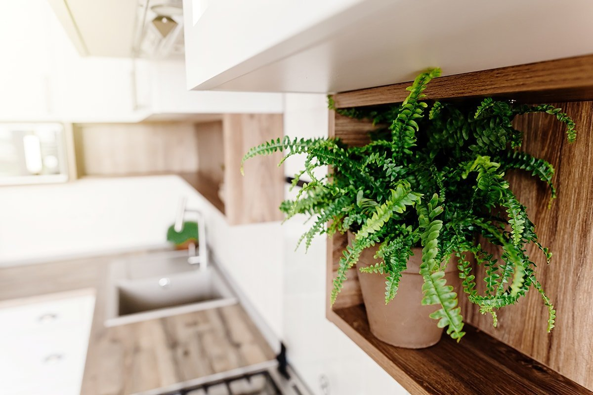 Kitchen cabinets with shelves and plants