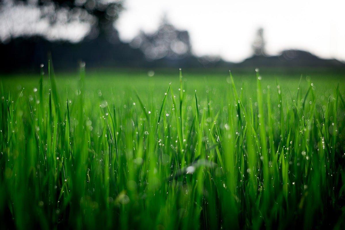 Shallow focus grass photo