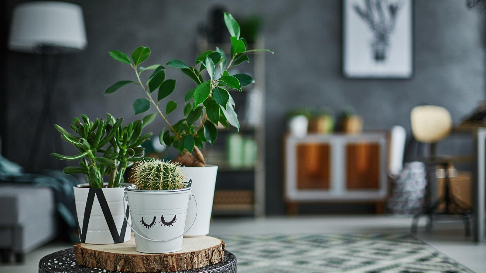 Decorative green houseplant in pot